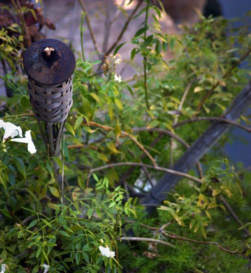 A torch in a garden