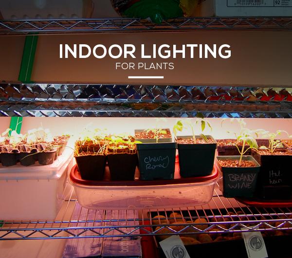 Indoor Lighting For Plants
